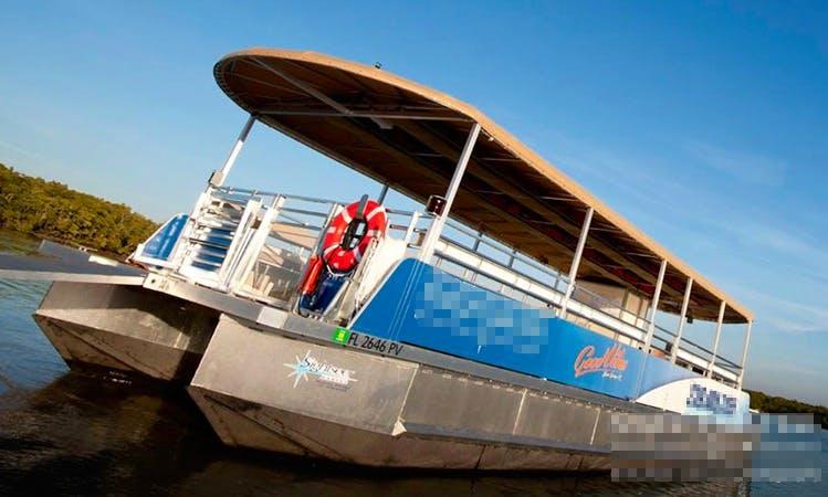 Dolphin Tour in Bonita Springs