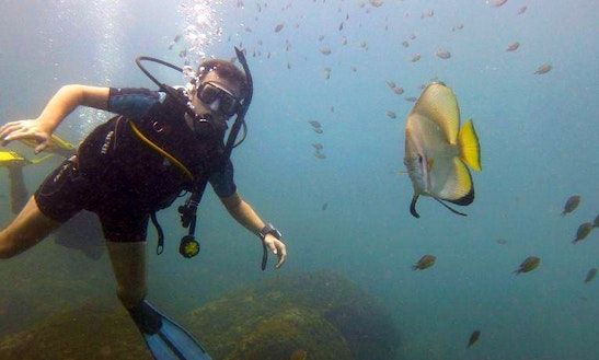 Enjoy Diving Trips In Candolim, Goa