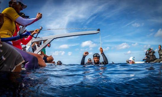 Freediving In Caribbean Netherlands