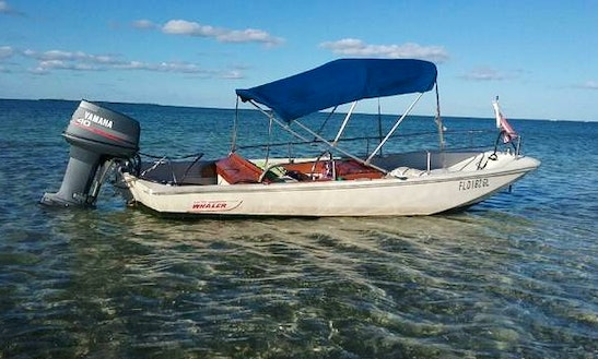 13' Boston Whaler Rental In Key Largo, Florida