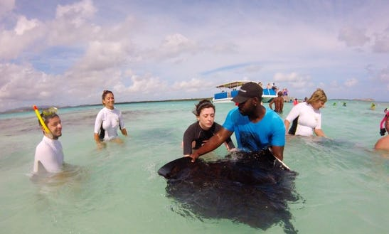 Swim With The Stingrays Tour In Saint Mary, Antigua