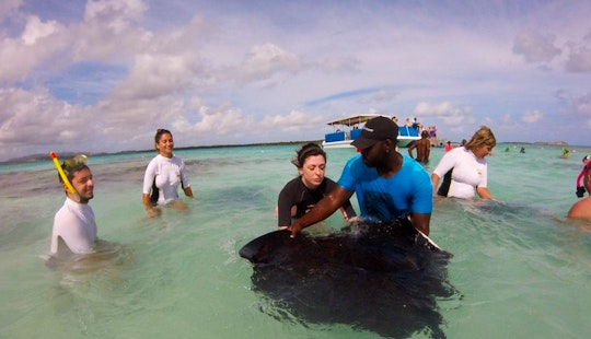 Swim With The Stingrays Tour In Saint Mary, Antigua