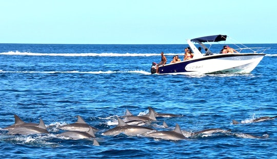 Dolphin Tours In Mahébourg, Mauritius