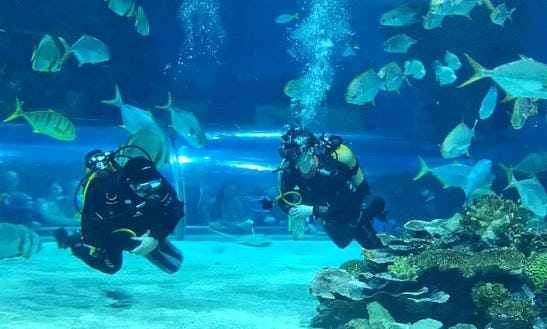 Enjoy Diving Tours & Courses In Budapest, Hungary
