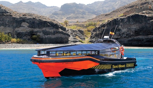 Dolphin & Whale Watching Tour In Gran Canaria
