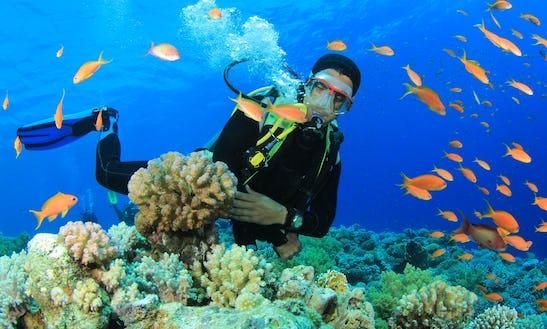 Enjoy Diving Trips In Mgarr, Malta