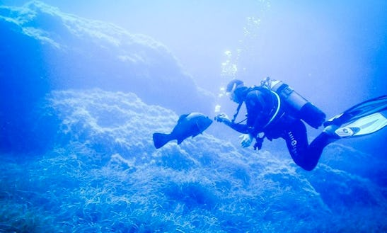 Enjoy Diving In Bormes Les Mimosas, France
