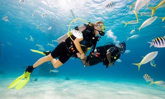 Enjoy Diving Trips And Courses In Abang, Bali