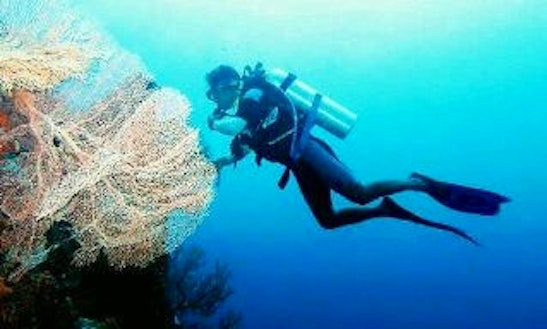 Enjoy Diving Adventure In Tenggara, Indonesia