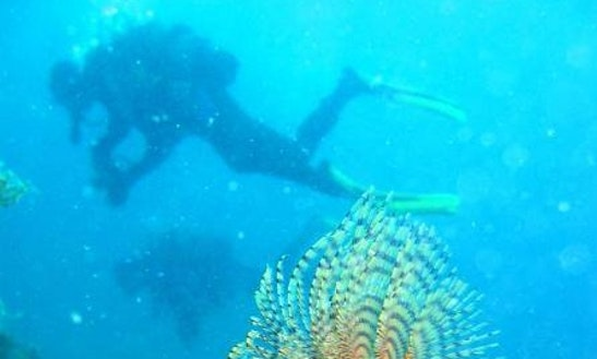 Enjoy Diving In Igrane, Croatia