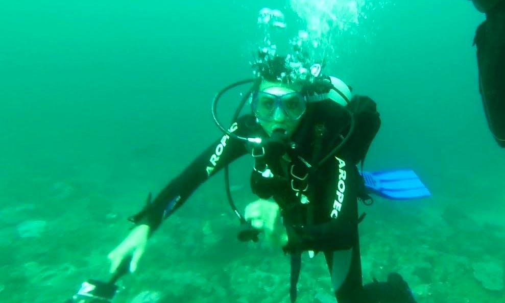 Enjoy Diving Courses in Durban North, KwaZulu-Natal