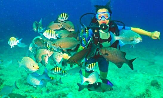 Diving In Carbonera