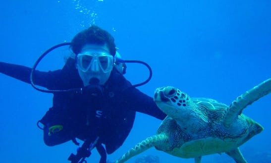 Try Scuba Diving In Ayia Napa, Cyprus
