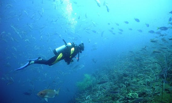 Enjoy Diving Courses In București, Romania