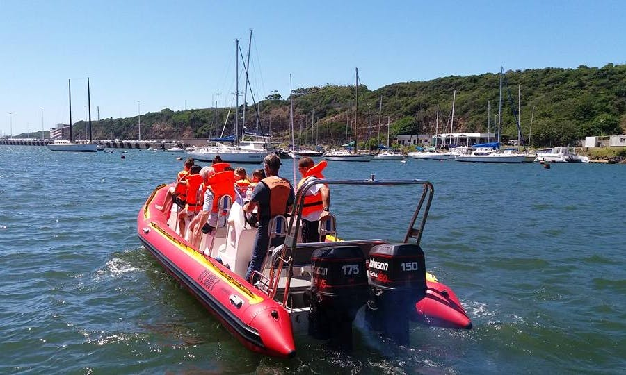 Charter a Rigid Inflatable Boat in East London, South Africa