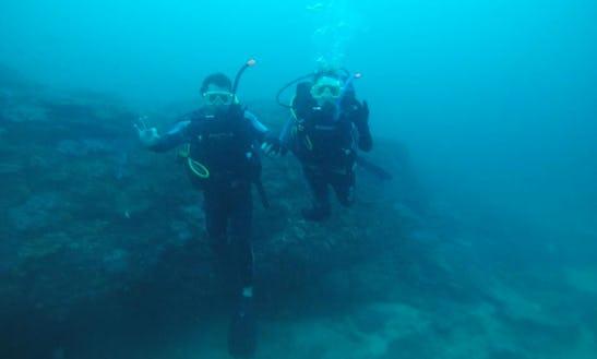 Enjoy Diving Courses In Moreton Island, Australia
