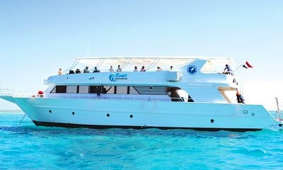 Enjoy Dolphin Tour in Red Sea Governorate