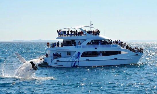 Australia's Gold Coast Whale Watching Tour On Spirit Of Migloo Catamaran