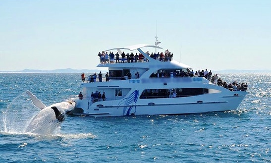 Australia's Gold Coast Whale Watching Tour On Spirit Of Migloo Catamaran