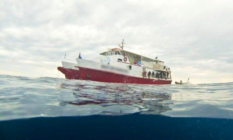 """Big Cat Reality"" Diving Trips in Queensland"