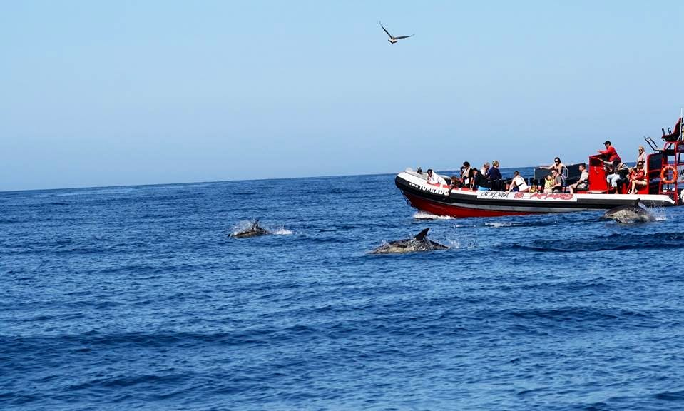 Enjoy Dolphin Watching in Lagos, Portugal