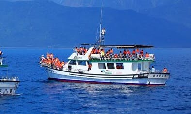 Dolphin Tour in Hualien City