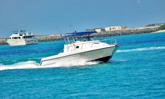Fishing Activity In Dubai