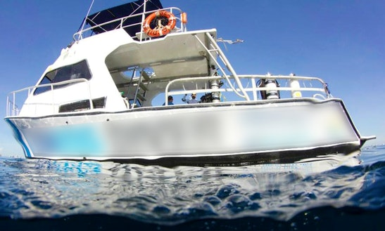 Boat Diving Charter On 36ft 'sea Dog Diver' Trawler In Pompano Beach, Florida
