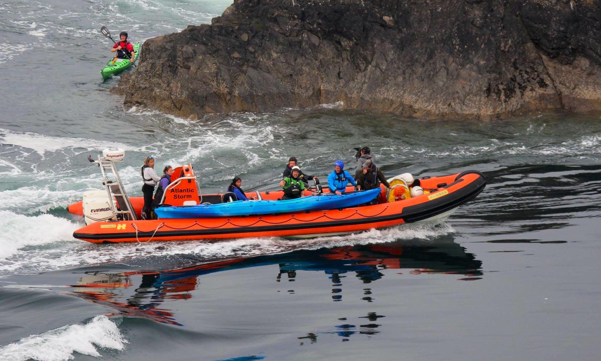 Enjoy Wildlife Boat Trips in St Davids, Pembrokeshire, Wales