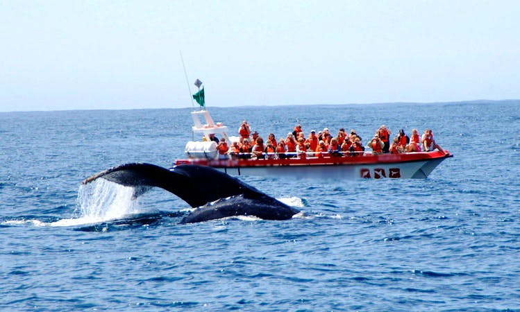 'Damara' Boat Whale & Dolphin Watching in Plettenberg Bay, Western Cape, South Africa