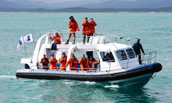 Island Cruises In Van Dyks Bay (gansbaai), South Africa
