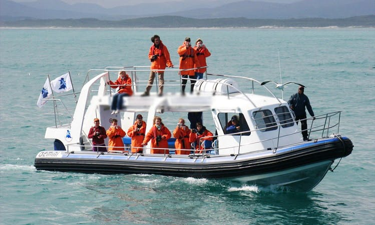 Island Cruises In Van Dyks Bay (Gansbaai), South Africa