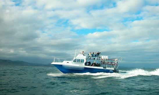 41' White Shark Cage Diving In Kleinbaai