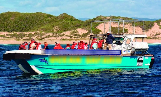 Whale & Dolphin Watching Boat Tours In Plettenberg Bay
