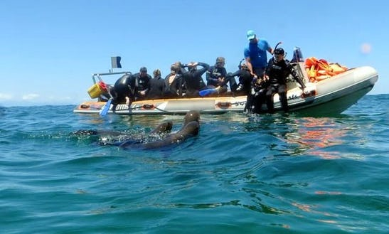 Rib Trips In Western Cape, South Africa