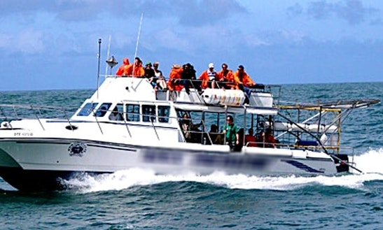 Enjoy Shark Diving In Cape Town, Western Cape On Apex Predator Power Catamaran