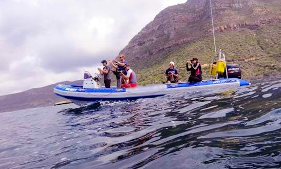 Scuba Dive Charter And Lessons In Cape Town, Western Cape
