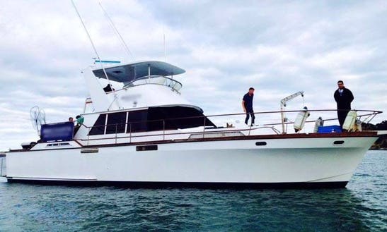 Mv Spartacus Boat Fishing Trips In Auckland