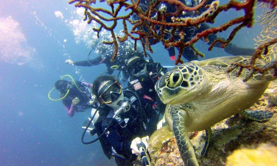 Scuba Diving in Philippines Island
