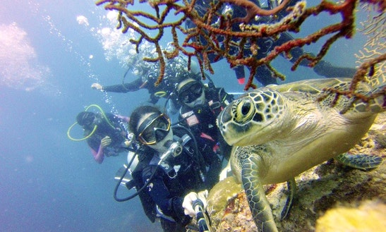Enjoy Scuba Diving In Manila, Philippines