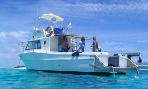 Whale Watching and Swimming Tour on Vava'u Islands, Tonga