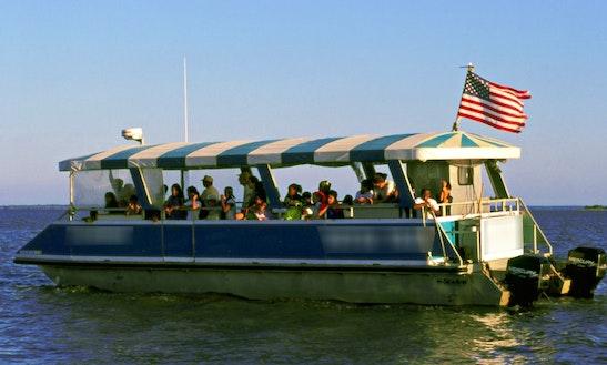 Dolphin Tour On Jekyll Island, Ga