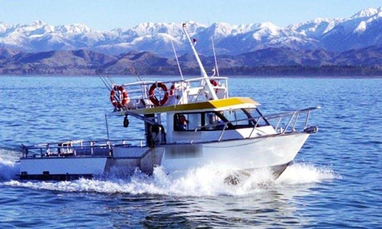 40' Sea Truck Fishing Boat In Kaikoura