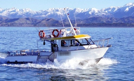 40' Sea Truck Fishing Boat In Kaikoura