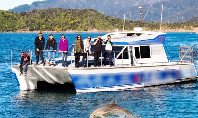 "Dolphin Swim or View Experience on 43' ""Delphinus"" Catamaran in Picton, New Zealand"