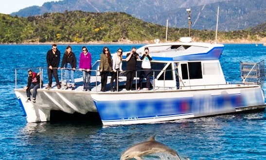 Dolphin Swim Or View Experience On 43'