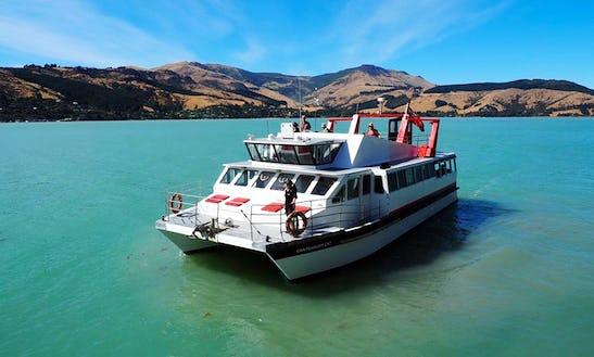 Captained Charter On 'canterbury Cat' Catamaran In Lyttelton Or Akaroa