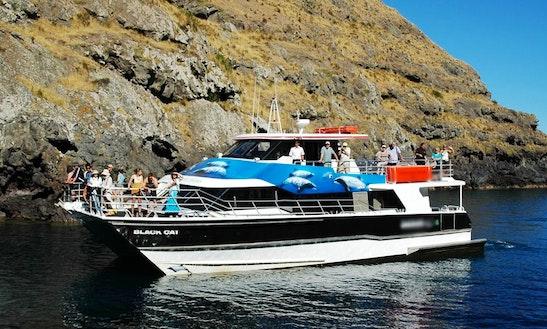 Captained Charter On 'black Cat' Catamaran In Lyttelton Or Akaroa