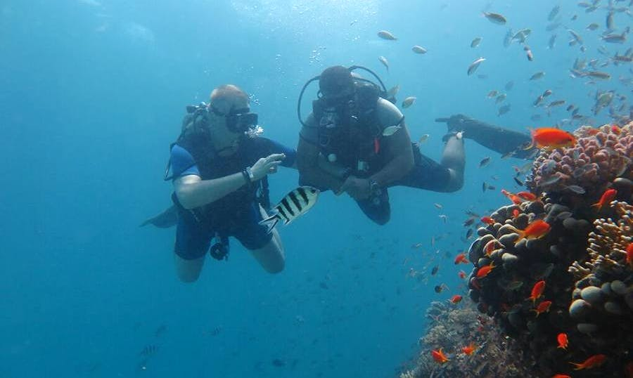 Dive with Dolphins in Red Sea Governorate, Egypt
