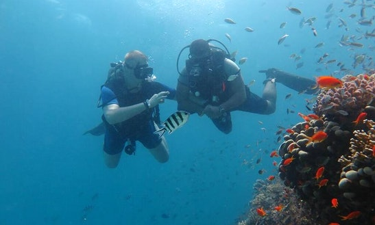 Enjoy Diving In Red Sea Governorate, Egypt